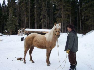 horsemanoo7